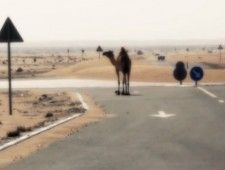 Camel Roundabout